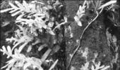 [신소재 신원료 소개] 일본촉매, 피부 비박화 억제로 주름개선 효과 'REVERSKIN™'