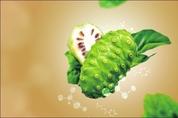 [신소재 신원료 소개] 노니 식물 줄기세포 배양 '데오도란트 케어' 원료 'DEOBIOME NONI'