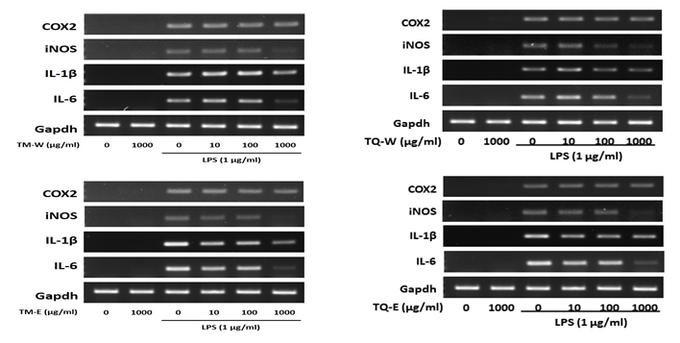 그림1 LPS 유도성 염증반응에서 추출물의 염증 매개 인자 발현 억제 효과